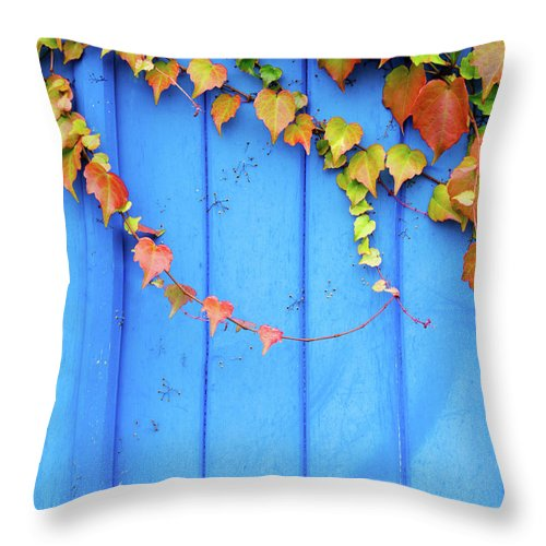 Architectural Feature Throw Pillow featuring the photograph Ivy On The Door by Zianlob