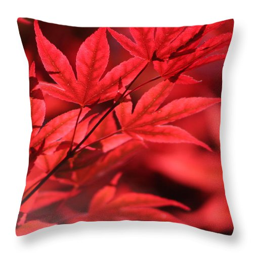 """Japanese Maple Leaves In Sangria Red"" Fine Art Photography on Throw Pillow"