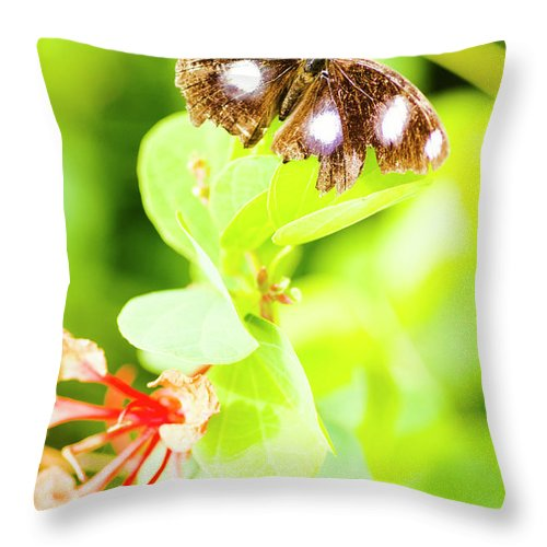Animal Throw Pillow featuring the photograph Jungle Bug by Jorgo Photography - Wall Art Gallery