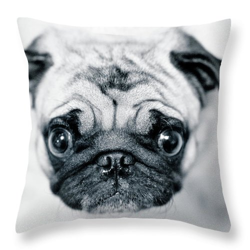 Pets Throw Pillow featuring the photograph Just Enough by Eddy Joaquim