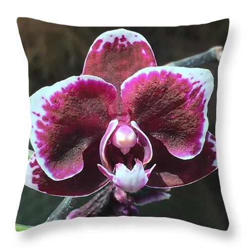 Throw Pillow featuring the photograph Just For You by Gewanda Parker