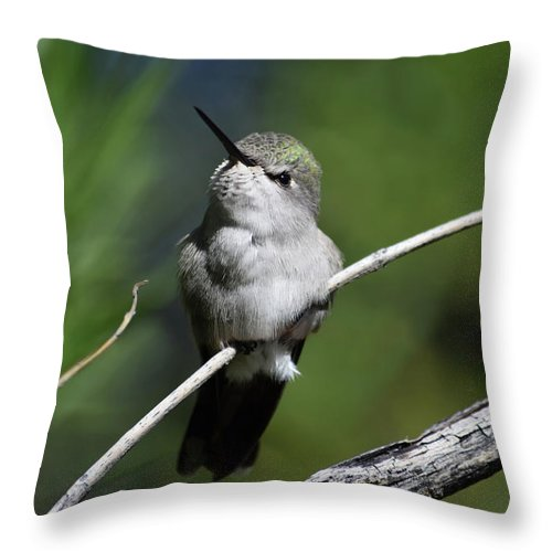 Hummingbird Throw Pillow featuring the photograph Just Sitting Here Being Cute by Tashina Van Zwam