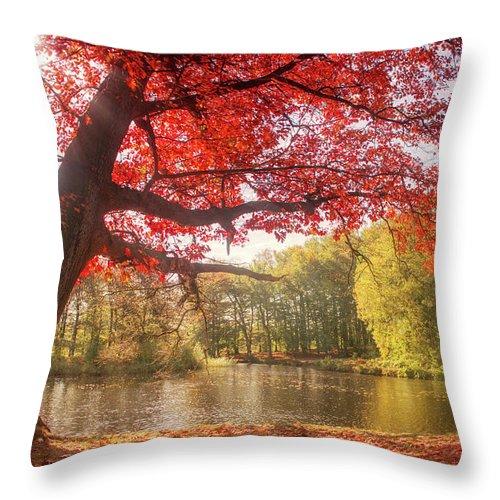 Forest Throw Pillow featuring the photograph Kasteel Groeneveld by Tashina Van Zwam