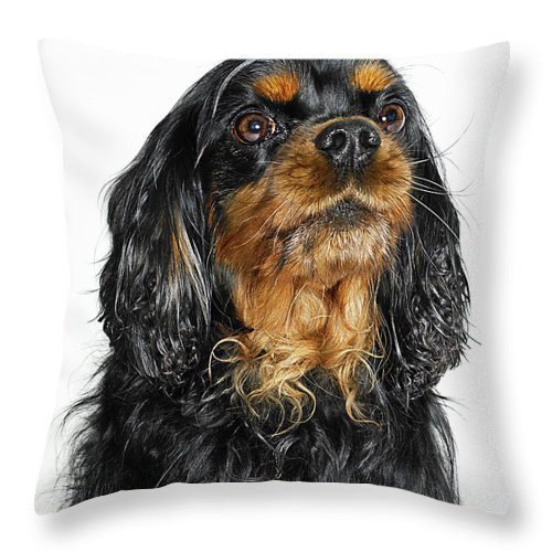 Pets Throw Pillow featuring the photograph King Charles Cavalier Portrait by Gandee Vasan