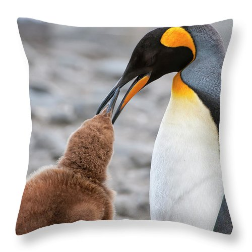 Care Throw Pillow featuring the photograph King Penguin Feeding A Chick by Gabrielle Therin-weise