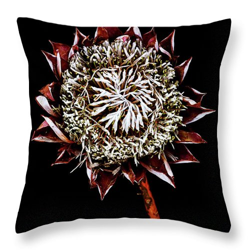 Black Background Throw Pillow featuring the photograph King Protea Top by Chris Stein
