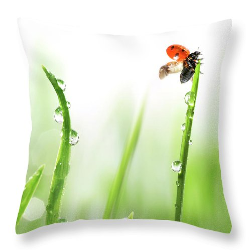 Hanging Throw Pillow featuring the photograph Ladybug On Green Grass by Sbayram