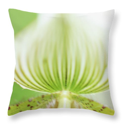 Single Flower Throw Pillow featuring the photograph Ladys Slipper Paphiopedilum Sukhakulii by Vera Storman