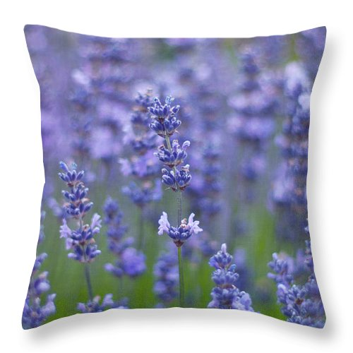 Otago Region Throw Pillow featuring the photograph Lavender Flowers by Jill Ferry