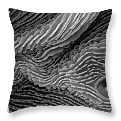 Microscope Throw Pillow featuring the photograph Lavender Leaf, Springtail, Sem by Sheri Neva