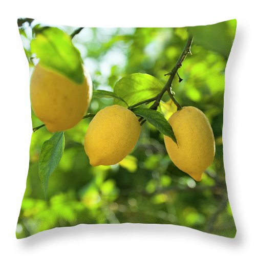 Vitamin C Throw Pillow featuring the photograph Lemon Fruits In Orchard by Brzozowska