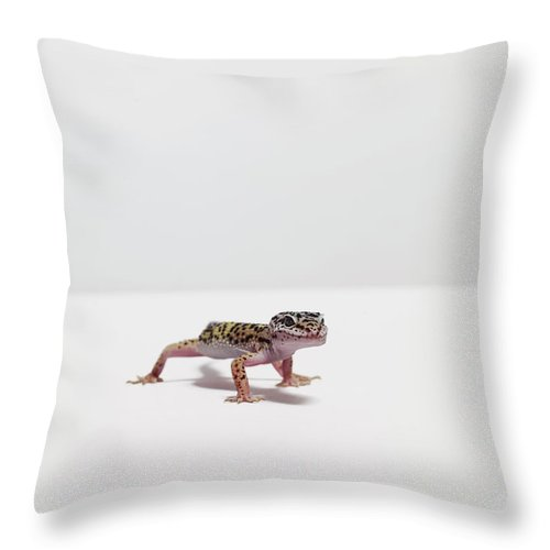 White Background Throw Pillow featuring the photograph Leopard Gecko by Dan Burn-forti