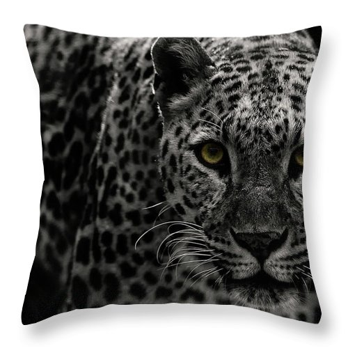 Big Cat Throw Pillow featuring the photograph Leopard by Somak Pal