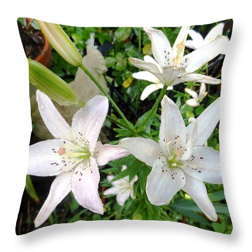 Blue Throw Pillow featuring the photograph Lily White by Lord Frederick Lyle Morris - Disabled Veteran