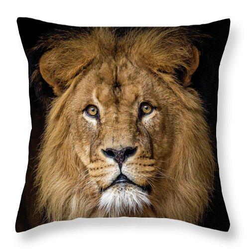 Alertness Throw Pillow featuring the photograph Lion by Bas Vermolen