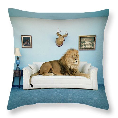 Pets Throw Pillow featuring the photograph Lion Lying On Couch, Side View by Matthias Clamer