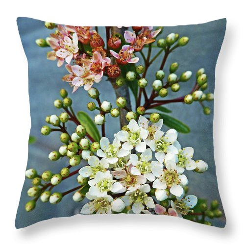 Bud Throw Pillow featuring the photograph Little Star Like Buds by Steve Taylor Photography