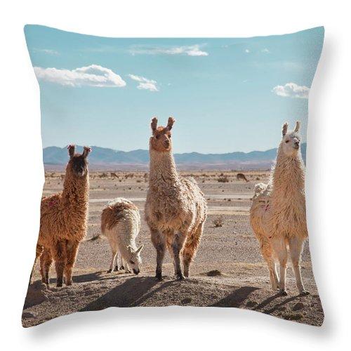 Shadow Throw Pillow featuring the photograph Llamas Posing In High Desert by Kathrin Ziegler