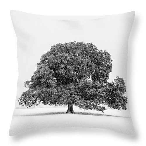 Scenics Throw Pillow featuring the photograph Lone Holm Oak Tree In Snow, Somerset, Uk by Nick Cable