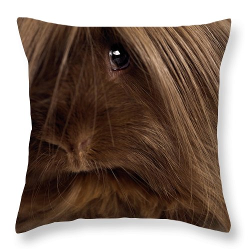 Pets Throw Pillow featuring the photograph Long Haired Guinea Pig, Close-up by Michael Blann