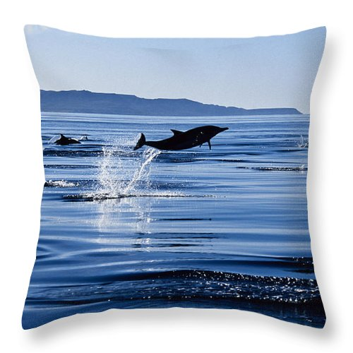 Latin America Throw Pillow featuring the photograph Long-nosed Common Dolphin,delphinus by Gerard Soury