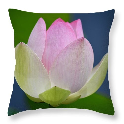 Lotus Throw Pillow featuring the photograph Lovely Soft Lotus by Richard Bryce and Family