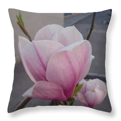 Throw Pillow featuring the photograph Magnolia by Anzhelina Georgieva