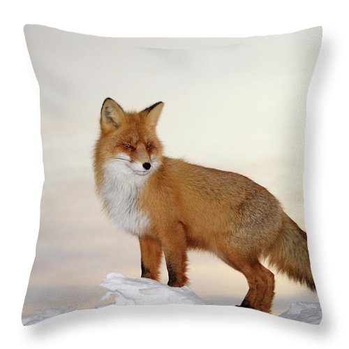 Black Color Throw Pillow featuring the photograph Majestic Fox by Dmitrynd