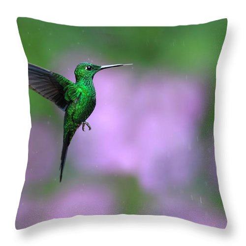 Animal Themes Throw Pillow featuring the photograph Male Green-crowned Brilliant Hovering by Mlorenzphotography