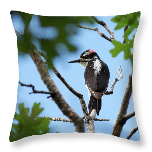 Woodpecker Throw Pillow featuring the photograph Maxwell Woodpecker by Maria Jeffs