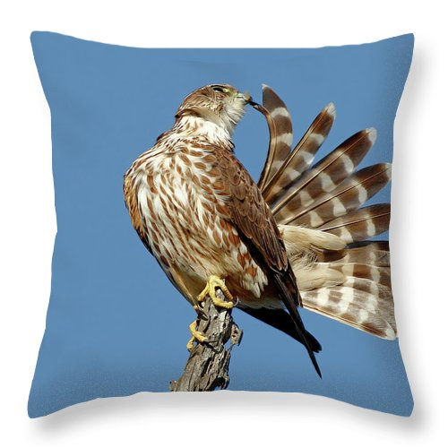 Animal Themes Throw Pillow featuring the photograph Merlins Grooming Session by Bmse