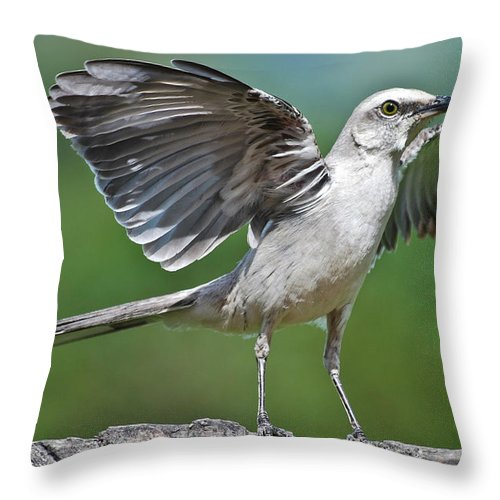 Animal Themes Throw Pillow featuring the photograph Mimus Gilvus by Photo By Priscilla Burcher