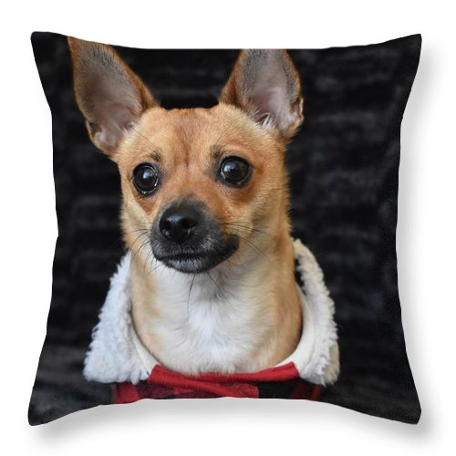 Chihuahua Throw Pillow featuring the digital art Miracle by Cassidy Marshall