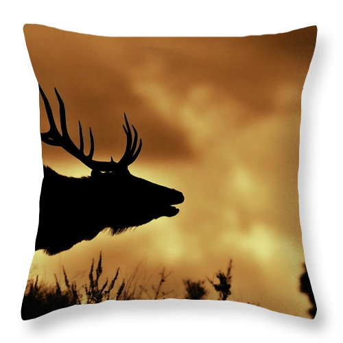 Animal Themes Throw Pillow featuring the photograph Moose At Sunrise by Photo By James Keith