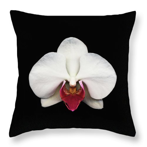 Black Background Throw Pillow featuring the photograph Moth Orchid Against Black Background by Mike Hill