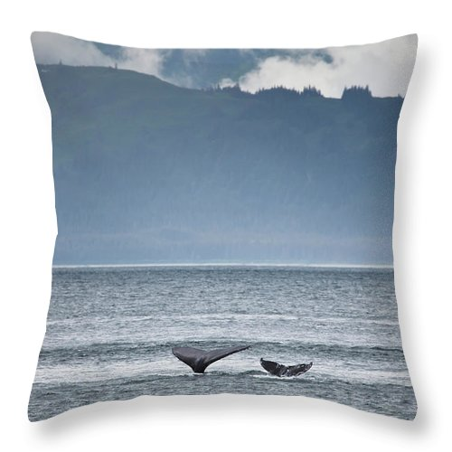 Water's Edge Throw Pillow featuring the photograph Mother And Calf Whale Tails Megaptera by Blake Kent / Design Pics