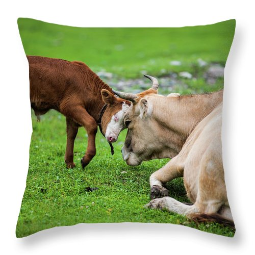 Grass Throw Pillow featuring the photograph Mother And Son by Zhouyousifang