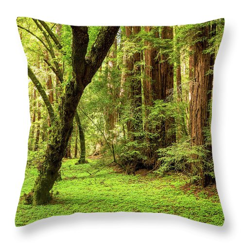 Tranquility Throw Pillow featuring the photograph Muir Woods Forest by By Ryan Fernandez