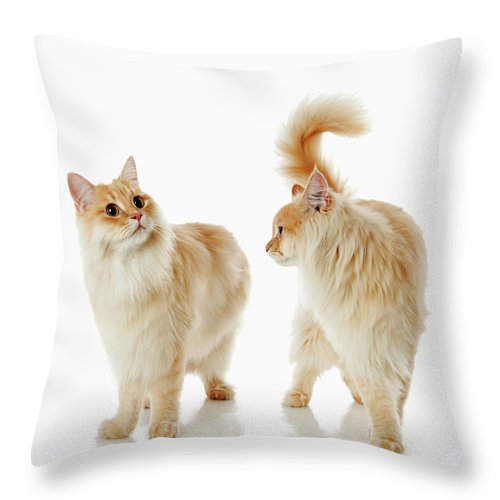 Humor Throw Pillow featuring the photograph Munchkin Cats by Ultra.f