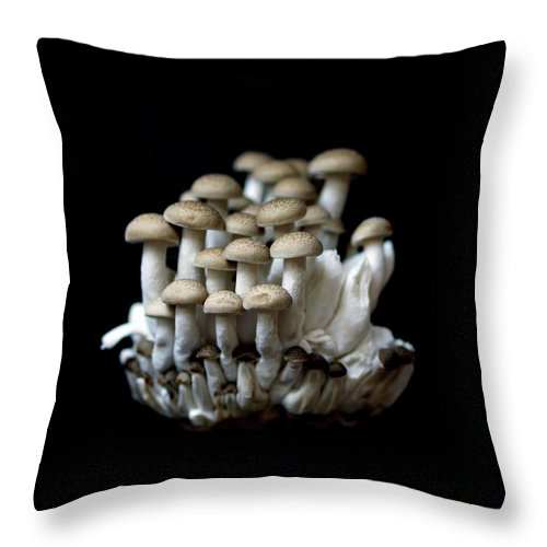 Edible Mushroom Throw Pillow featuring the photograph Mushoom Against Black Background by Zachary Rathore