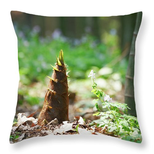 Chinese Culture Throw Pillow featuring the photograph New Bamboo Shoots by Sandsun