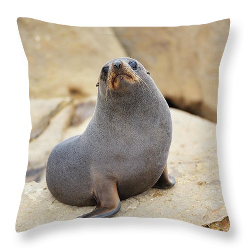 Alertness Throw Pillow featuring the photograph New Zealand Fur Seal, Arctocephalus by Raimund Linke