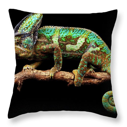 Animal Themes Throw Pillow featuring the photograph Nice And Slow by Markbridger