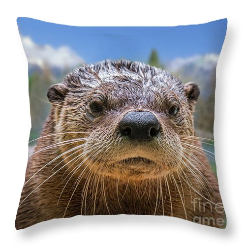 North American River Otter Throw Pillow featuring the photograph North American River Otter by Arterra Picture Library