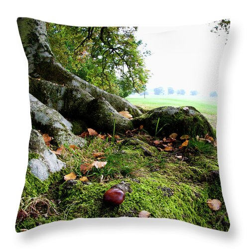 Nut Throw Pillow featuring the photograph Nuts And Fallen Leaves At The Foot Of A by John Short / Design Pics