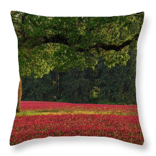 Scenics Throw Pillow featuring the photograph Oak Tree In Red Clover Field by Jason Harris