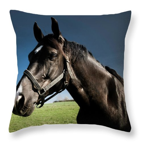 Horse Throw Pillow featuring the photograph On The Meadow by Pixalot