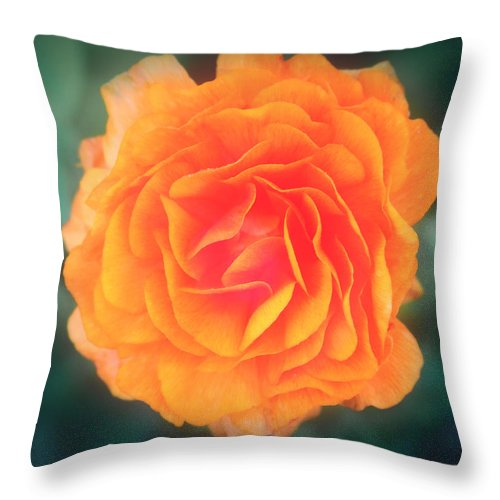 Flower Throw Pillow featuring the photograph Orange Blossom by Chocolate Pudding