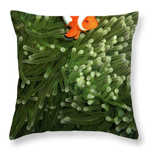 Underwater Throw Pillow featuring the photograph Orange Fish With Yellow Stripe by Perry L Aragon