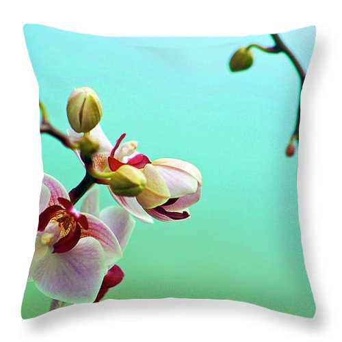 Petal Throw Pillow featuring the photograph Orchids Out For A Breath Of Fresh Air by Photo By Alan Shapiro